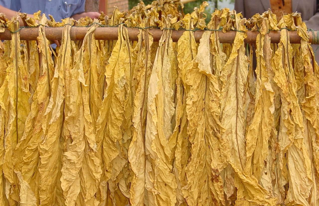 给新烟民的一些经验,新疆、吉林、云南、广西、贵州、河南等地的烟草作过对比评测,今天对市面上主流的几种品种进行评测:南雄烟丝、云南烟丝、湖南烟丝
