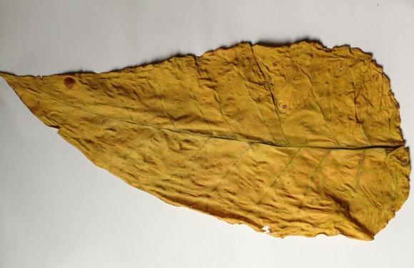 网上购买烟丝渠道,散装烟丝比烟卷的多,价格低划算。如何装烟斗丝,烟叶的种植技术